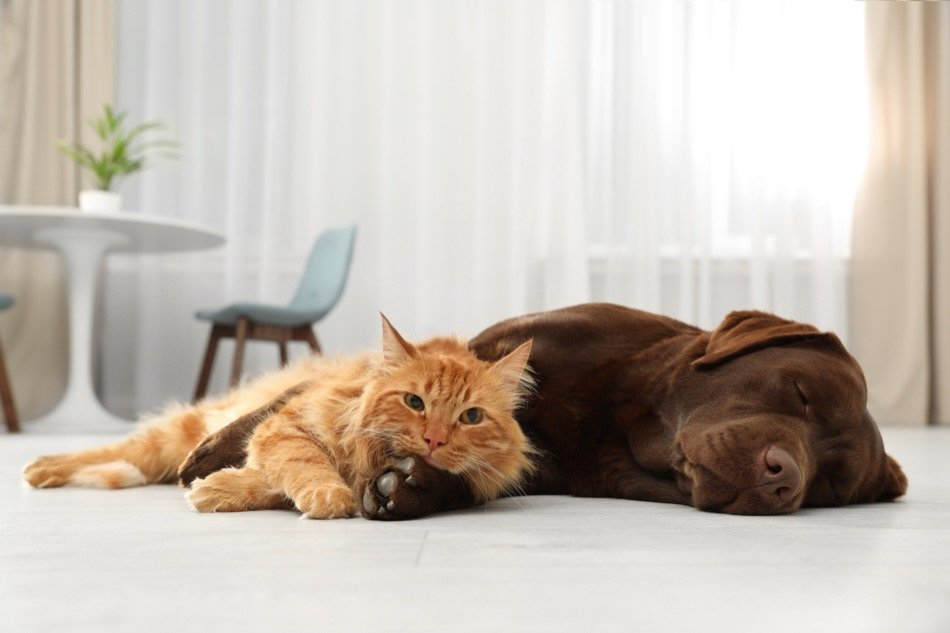 4 Ways You Can Improve Your Home Showings with Pets